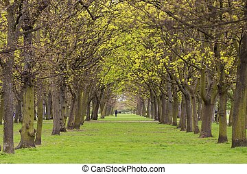 Tree park alley - Alley of trees and lawn in Regent's park...