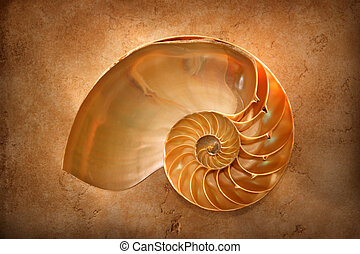 Chambered Nautilus on a marble slab glows with an inner...