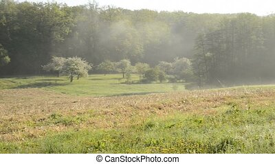 dancing morning steam on a meadow