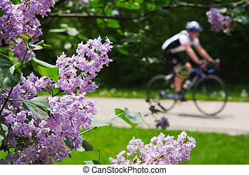 Spring ride - close up of Lilacs with a bicylist in the...