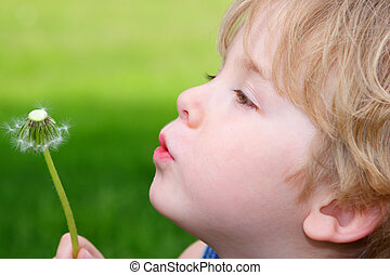 Wishes - a young boy blows on a dandelion clock the seed...