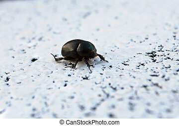 small beetle on a white background