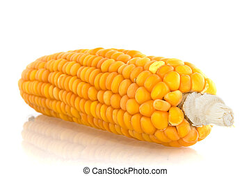 corncob - raw corncob isolated over white