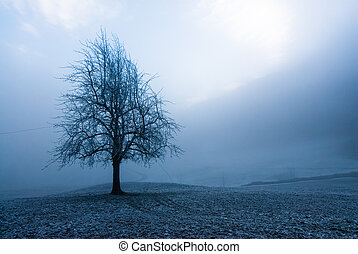 moody winter tree - mystic tree in fog on a dark winter day