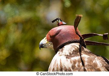falcon hood