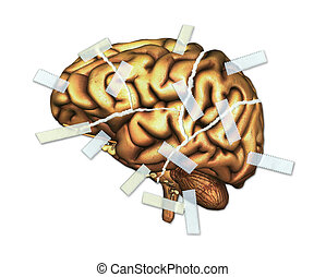 Brain Injury and Repair - A human brain, torn up and taped...