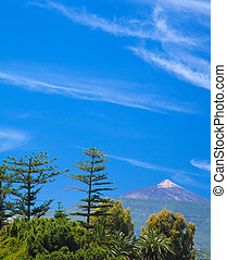 Northern Tenerife, view over tree tops towards Teide,...