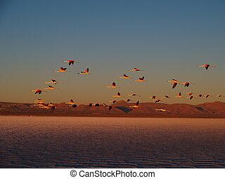 Saltlake Salar de Uyuni - Salar de Uyuni (or Salar de...