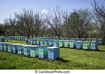 apiary  in the nature farm