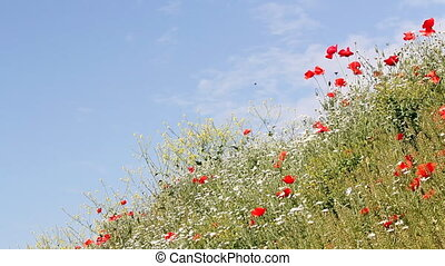 wild flowers and blue sky