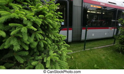 Tram passing between the tree