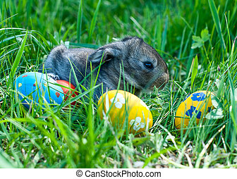 little easter bunny sitting in the grass, scattered around...