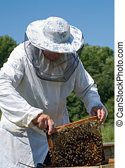 Beekeeper 45 - A beekeeper in veil at apiary among hives....