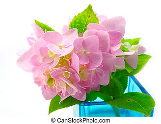 Pink Hydrangea flowers in blue glass