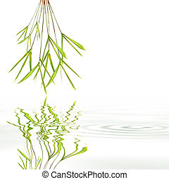 Bamboo Leaf Grass Simplicity - Bamboo leaf grass with...