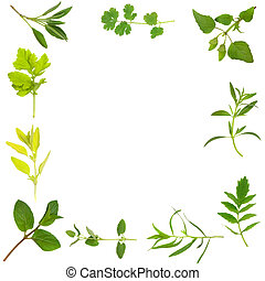 Herb Leaf Border - Herb leaf selection forming an abstract...