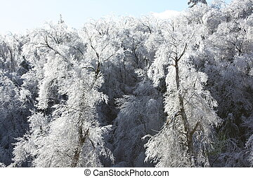 Icy Trees II - Ice covered tree taken after ice storm in the...