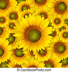 beautiful yellow Sunflower petals closeup patterns...