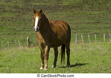 Horse farm - One brown horse (full body) in a green field of...