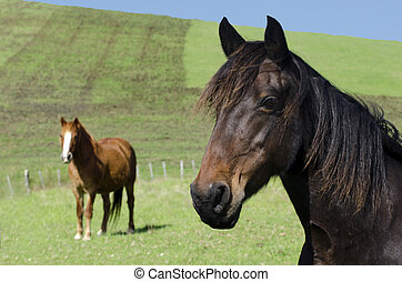 Horse farm - Two horses in a green field of a horse farm
