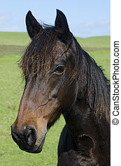 Horse farm - Portrait of a black horse in a horse farm