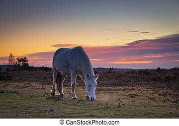 New Forest Pony sunset