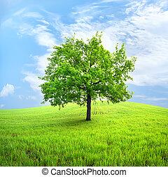 Tree in field - Green tree in a spring field against the sky