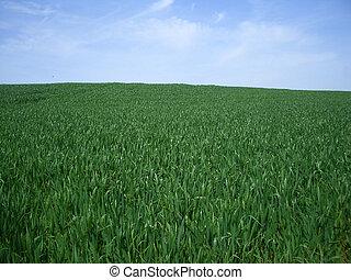 Green Grass, Blue Sky Background