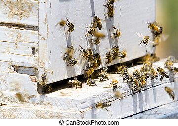 Beekeeping - Installation of bee hives at new location.