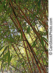 Bamboo Plant - Bamboo branches and fronds forming a nice...