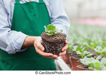 Garden center worker holding plant out of its pot in...