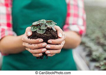 Garden center employee holding plant - Female garden center...