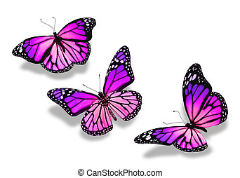 Three violet blue butterflies, isolated on white background