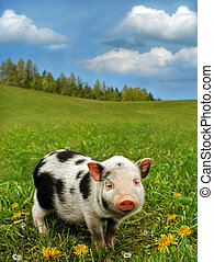 Cute piglet on spring meadow - Small lovely pig on fresh...