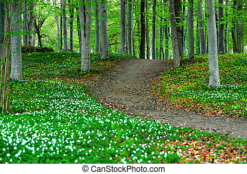 Park with wood anemone flowers - Park area with aspen trees...