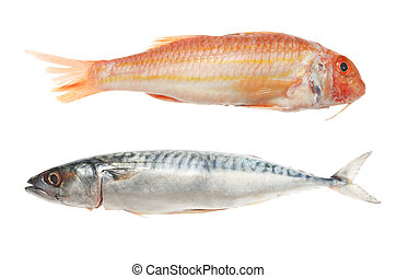 Red mullet and mackerel fish on white