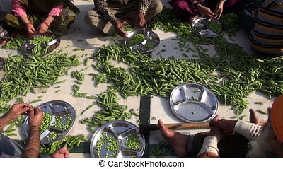 people hands hulled peas - people hands in Amritsar temple...