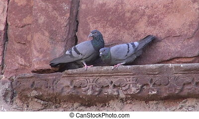 pair pigeons on old historical wall