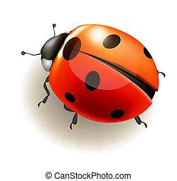 Ladybird. Vector illustration. - Ladybird on white...