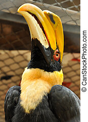 Great Hornbills are usually seen in small parties with...
