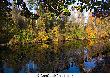 Beautiful fall color along the Great Dismal Swamp Canal
