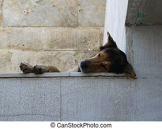 stray dog sleeping on a raised platform looking down