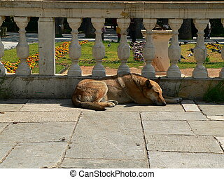 stray dog sleeping next to a wall