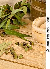 aromático, eucalipto