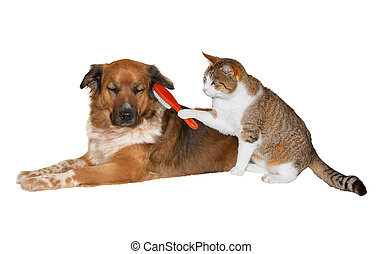 Cat brushing a blissful dog - Quirky image of a pretty...