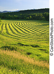 Harvested crop in Stowe, Vermont - Rows of harvested crop on...
