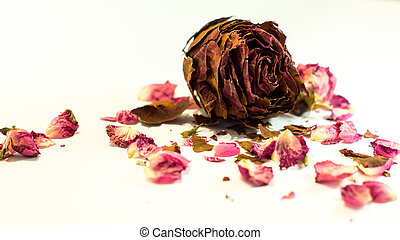 the embodiment of love and maturity in the rose - Rose