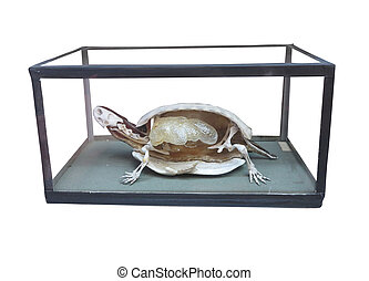 Dissected turtle with skeleton inside isolated over white...