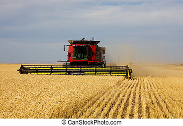 Fall Harvest - A farmer combining his field of wheat.