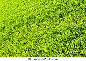 Texture of green fresh grass